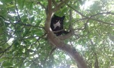 Corky up a tree