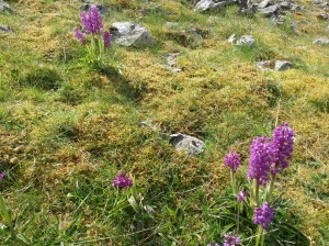 annedegruchy.co.uk image: Early purple orchids